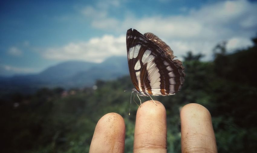 Human and butterfly interaction