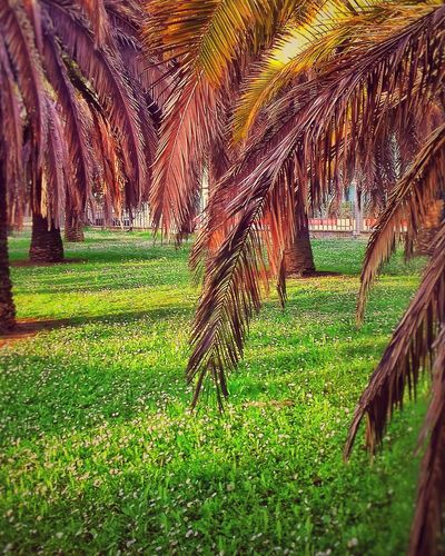 #palmtree #Palms #Nature  #landscape #nature #photography Rural Scene Rice Paddy Agriculture Field Grass Landscape Green Color Plantation