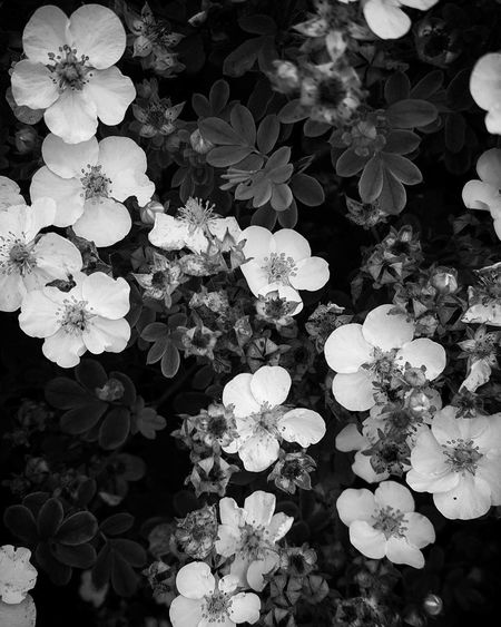 """into darkness"" Beauty In Nature Nature No People Flower Fragility Petal Full Frame Growth Plant Outdoors Close-up Backgrounds Flower Head The Week On EyeEm People Abstract Photography White Background Blackandwhitephoto Blackandwhiteworld Photography Themes Camera - Photographic Equipment"