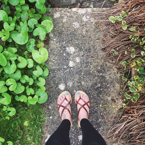 Leather Sandals, Feet and Garden Day Directly Above Garden Grass Green Color Growth High Angle View Human Body Part Human Leg Leaf Leather Sandals Lifestyles Low Section Nature One Person Outdoors People Plant Real People Shoe Standing Tattoo Women