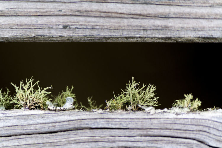 Boardwalk Close-up Fungus Horizontal Lines Looking Down Moss Moss And Lichen No People Plant Plant Small Life Small Plant Unruly Warf Weathered Wood Wiry Wood - Material Wooden Planks