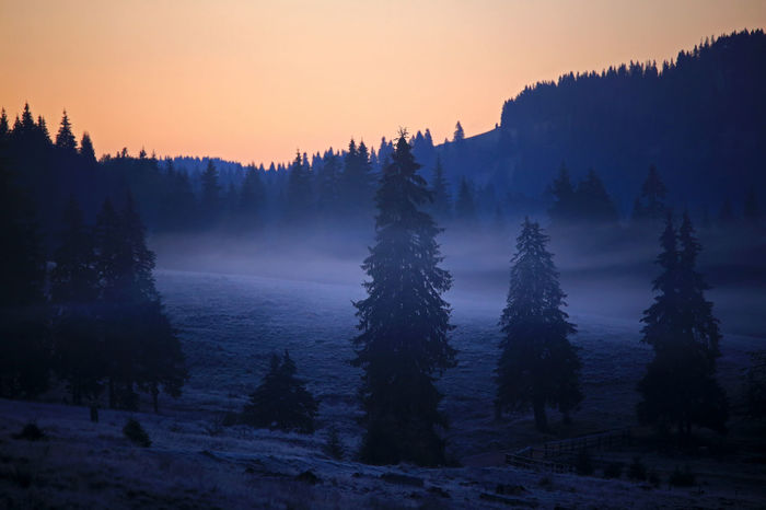 Autumn Dawn Light EyeEmNewHere Morning Light Morning Mist Morning Sky Pine Forest Silhouettes Beauty In Nature Landscape Nature No People Scenics Tranquil Scene Transylvania💕