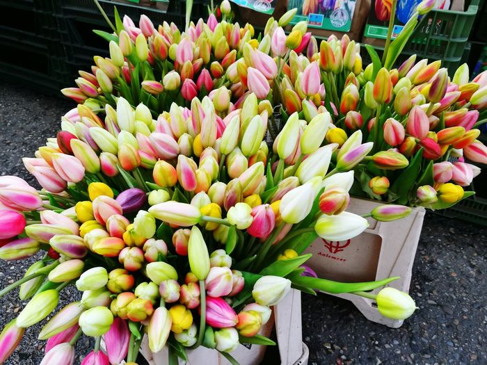 Flower Growth Plant Freshness Outdoors No People Green Color Day Nature Fragility Beauty In Nature Flower Head Close-up