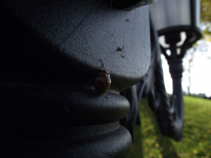 Close-up Sunlight Outdoors Day Ladybug Hungary Sky Nature No People