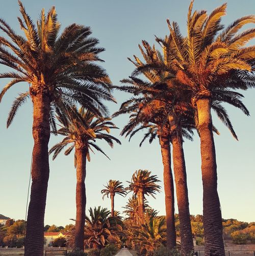 Palm Tree blue sky Nature No People EyeEmNewHere From My Point Of View EyeEm Nature Lover Provence Alpes Cote D'azur Trees Are Beautiful
