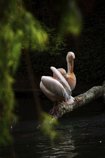 Animal Animal Themes Animal Wildlife Animals In The Wild Beauty In Nature Bird Famingos Lake Nature Reflection Water Zoology