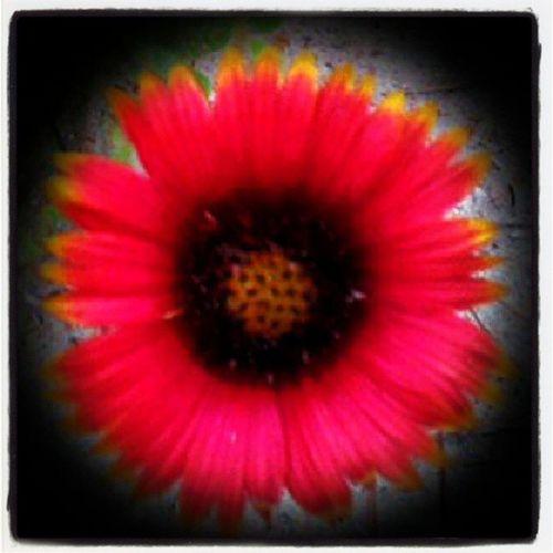Beautifulflower