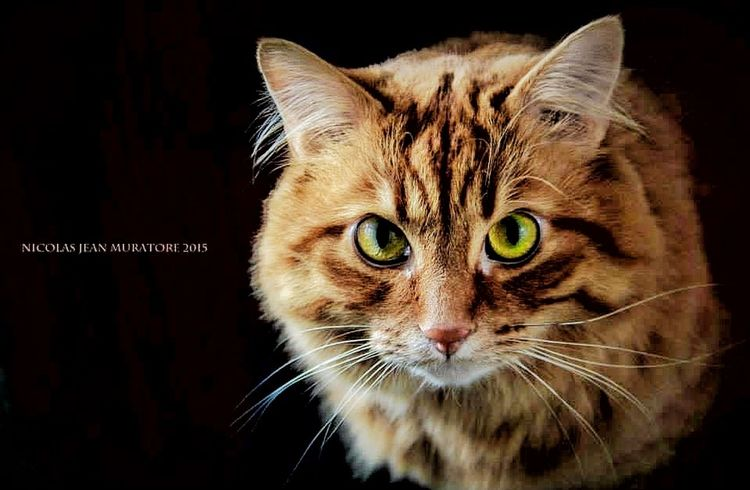Canon Cat Orange NJMphotography Pets Colors Light And Shadow Contrast Animals Indoor
