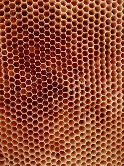 Honey Miele Api Telaio Regular No People Orange Gold Nature Beuaty  Backgrounds Textured  Full Frame Close-up Honeycomb Honey Bee Honey Bee Hexagon Geometric Shape Grille Fig APIculture