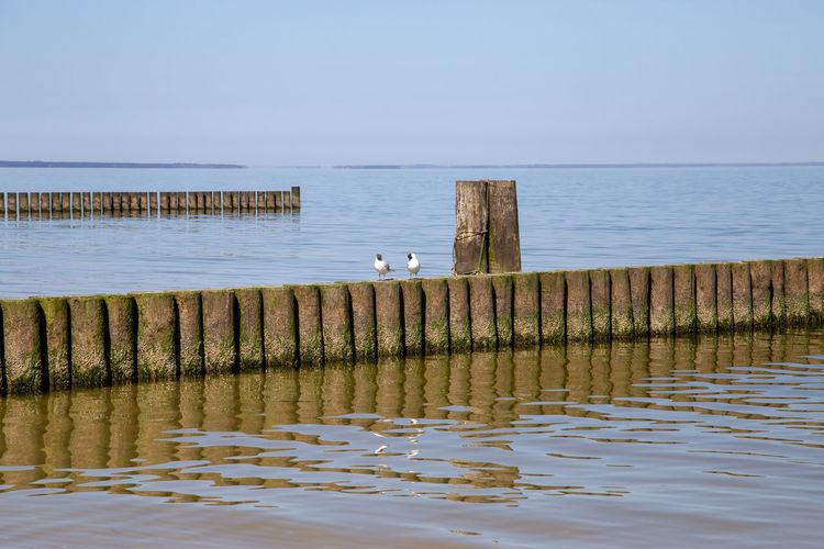 Seagulls on wooden post in sea against clear sky