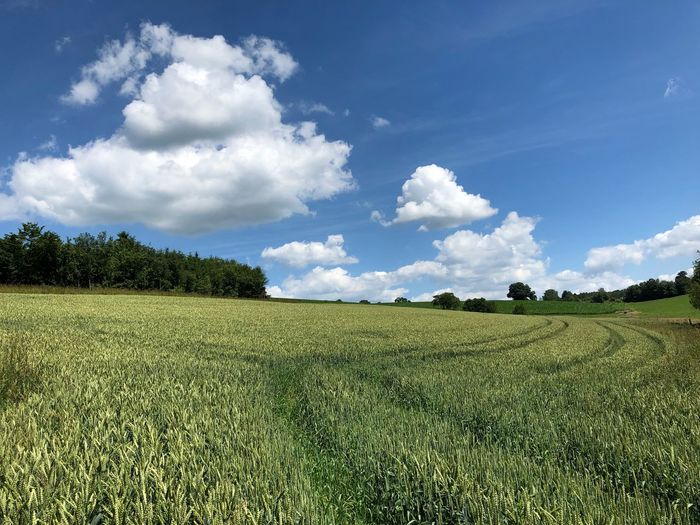 Plant Sky Cloud - Sky Field Growth Green Color Land Landscape Beauty In Nature Environment Scenics - Nature Tranquil Scene Tranquility Nature Day Tree Agriculture No People Rural Scene Crop