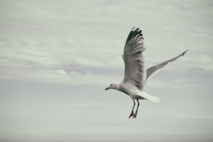 Freedom Animal Themes Animals In The Wild Art Is Everywhere Bird Bird Photography Birds Of EyeEm  EyeEm Animal Lover EyeEm Best Shots EyeEm Diversity Flying Freedom In Flight Mid-air Motion No People One Animal Sea Bird Seagull Sky Spread Wings Breathing Space Perspectives On Nature