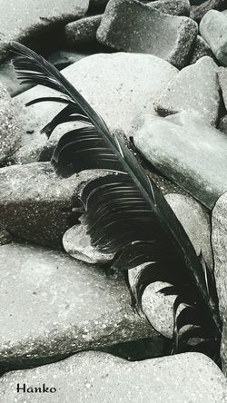 Black Swan? Feathers Findings Findings In Nature Nobody Blackandwhite Black