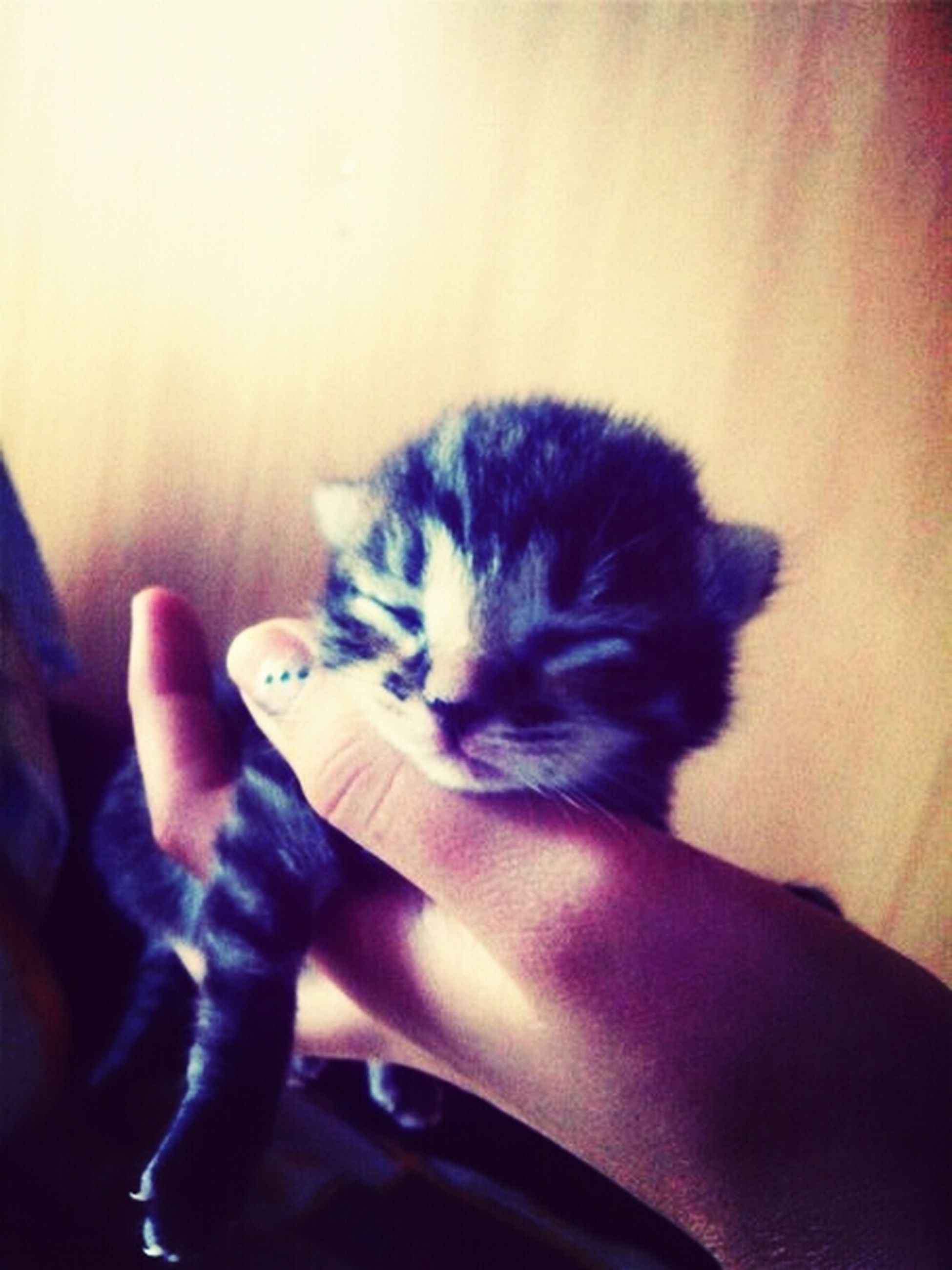indoors, animal themes, pets, one animal, domestic cat, domestic animals, person, home interior, lifestyles, mammal, cat, unrecognizable person, leisure activity, part of, human finger, holding