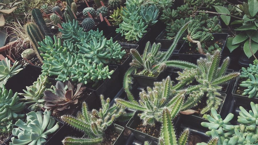 Succulents Nature Urbanoutfitters Life Home Plants Greenhouse Babe Cacti Garden Indie Boquet