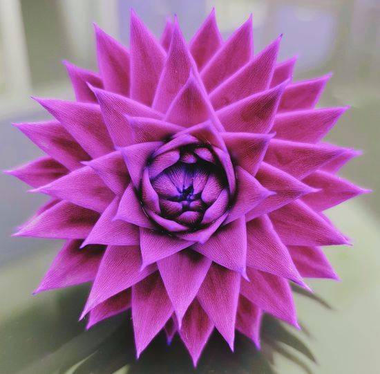 Trees Dont Have To Be Green EyeEmNewHere Monkey Puzzle Flower Flower Head Pink Color Purple Petal Females Beauty Close-up