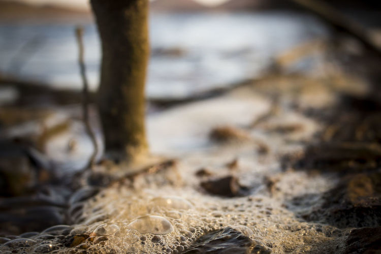 Natural Beauty Natural Light Brown Brown In Nature Bubble Close-up Day Focus On Foreground Ground Level View Land Natural Bubbles Nature No People Outdoors Selective Focus Surface Level Tree Trunk Water Water And Bubbles Wood - Material