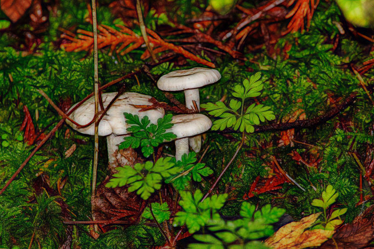 Mushrooms Northwest Trek Growth Plant Green Color Vegetable Land Mushroom Nature Fungus No People Day Freshness High Angle View Food Beauty In Nature Field Close-up Grass Moss Vulnerability  Tranquility Outdoors Toadstool