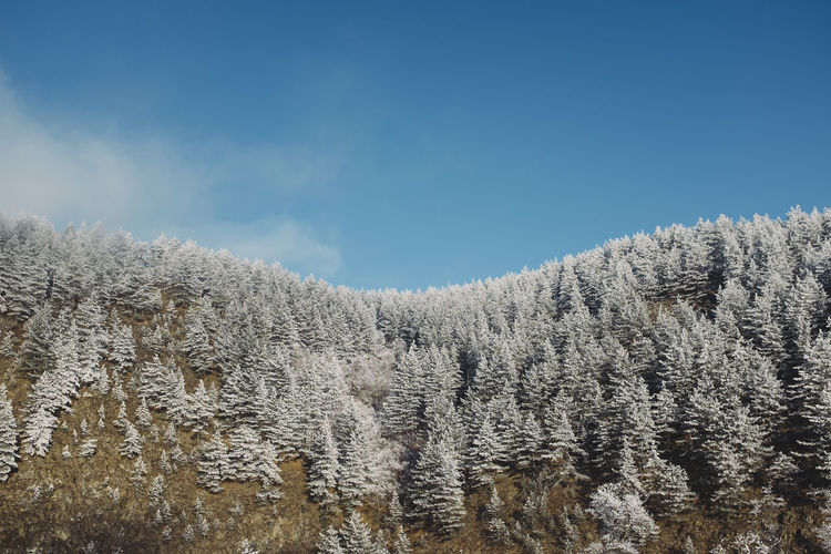 Hills Beauty In Nature Clear Sky Cloud Day Forest Hill Landscape Nature Nautre No People Outdoors Serbia Sky Snow Trees Winter Winter Woods