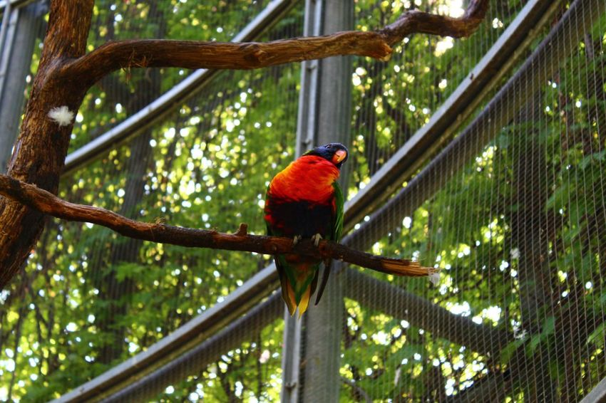 Sweet Bird Perching Tree Macaw Parrot Rainbow Lorikeet Multi Colored Red Scarlet Macaw Tropical Bird Rainforest Tropical Rainforest Animals In Captivity