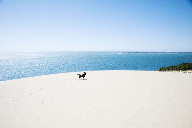 Summer Dogs Dune du Pyla, France. My dog Amber running down this 110mtr high sand dune hoping to find water to cool down. Clearly she is enjoying the race to the water, I guess I'm losing this race... Nikon Dog France Summer Zerofotografie.nl OpenEdit Travel Photography Enjoying Life Labrador My Best Travel Photo