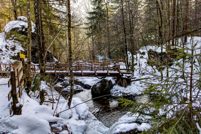 Bare Tree Beauty In Nature Cold Temperature Day Forest Frozen Landscape Myrafaelle Myrafällle Nature No People Outdoors River Scenics Snow Tranquil Scene Tranquility Tree Water Winter