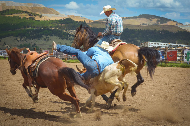 Horse Domestic Animals Mammal Horseback Riding Riding Working Animal Livestock Animal Themes Cowboy Animal Saddle Sky Adult People One Person Competition Sports Race Outdoors Speed Agriculture