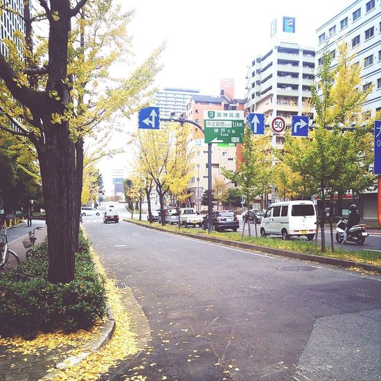 Autumn leaves, Osaka city, Japan. Osaka,Japan Autumn Leaves Japanese Culture
