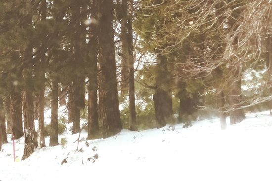 Tree Cold Temperature Snow Winter Tree Trunk Nature Forest Growth Beauty In Nature Tranquility No People Outdoors Day