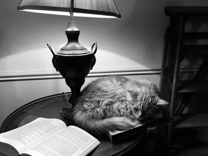 Gato de Dournès