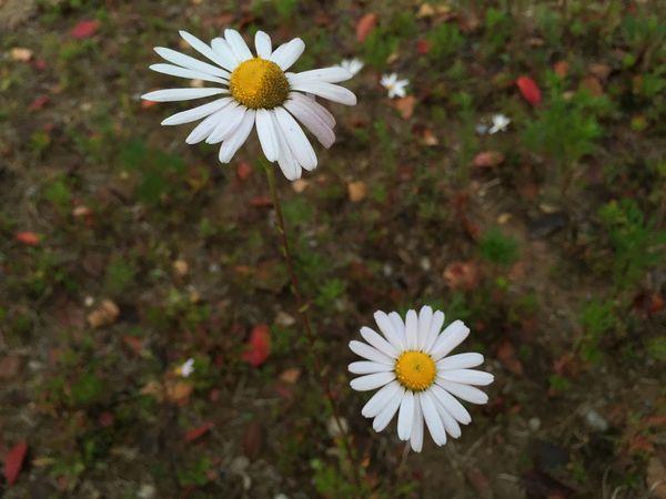 ㅈ심산책길에 한장 EyeEm Korea Seoul, Korea Flowers