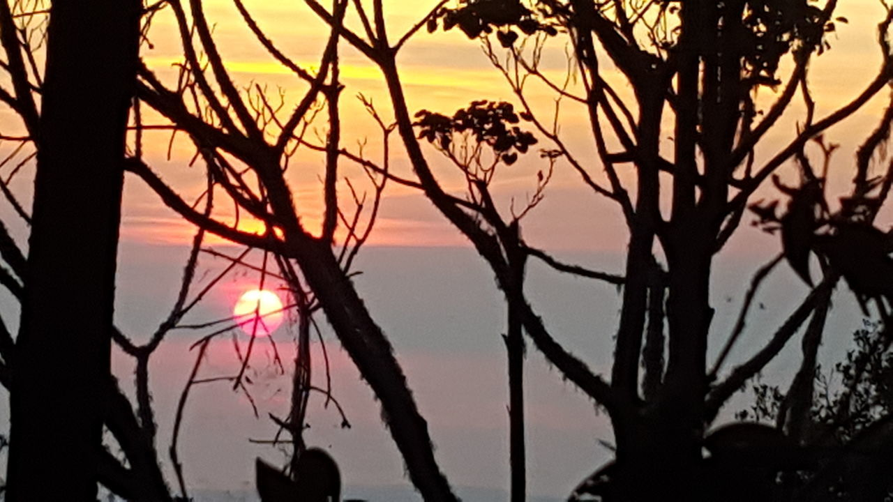 silhouette, sunset, tree, nature, beauty in nature, scenics, tranquility, outdoors, tranquil scene, branch, sun, sky, no people, sunlight, growth, bare tree, day, water