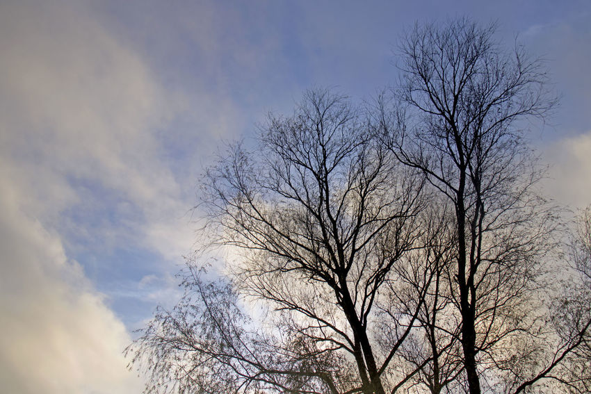 Bare Tree Sky Tree Low Angle View Plant Cloud - Sky Branch Nature No People Silhouette Beauty In Nature Day Outdoors Scenics - Nature Tranquility Dusk Winter Treetop Non-urban Scene Tree Canopy