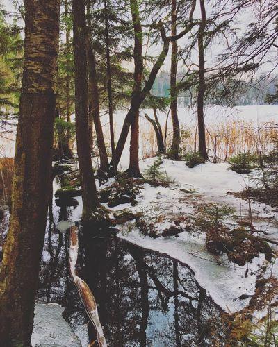 Helsinki Finland Scandinavia Nature WoodLand Lake Frozenlake Frozen Snow Trees Forest Winter Porvoo, Finland Ice