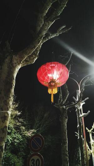 灯笼 Red Night No People Tree Outdoors