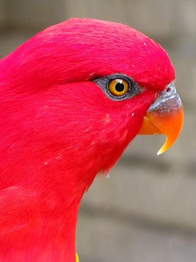 Close-up portrait of parrot