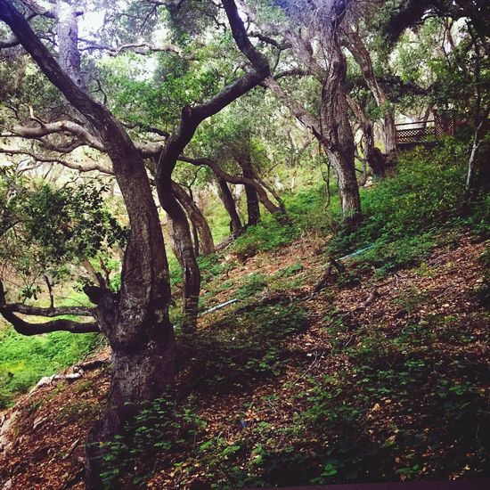 Nature Trees Avila Beach CA The Great Outdoors - 2018 EyeEm Awards