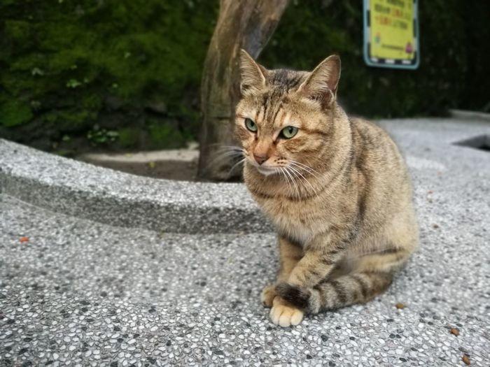 Cats Catslife Houtong Houtong Cat Village Taiwan
