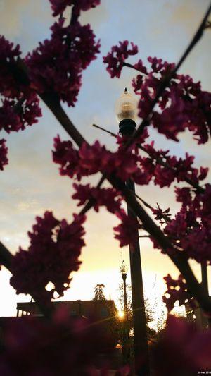 la vida está llena de alegría Villanueva'sphoto Branch First Eyeem Photo 印象 VSCO EyeEm Nature Lover Snapseed ınstagram Flower Sky Architecture Building Exterior Close-up Built Structure Blooming Plant Life
