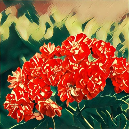 Beauty In Nature Bloom Bunch Of Flowers Close-up Creativity Flower Flower Head Fragility Freshness Multi Colored Nature No People Petal Prisma Prisma App Red Softness Vibrant Color