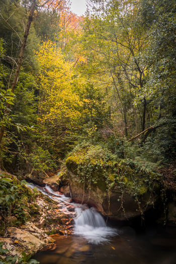 Scenic view of stream flowing amidst trees during autumn