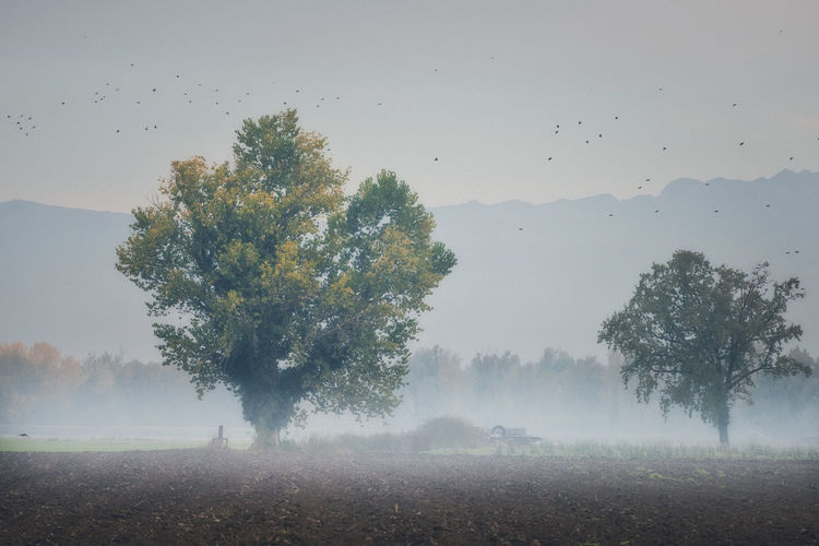 Agriculture Animal Themes Beauty In Nature Day Field Fog Growth Hazy  Landscape Mist Mountain Nature No People Outdoors Rural Scene Scenics Sky Tranquil Scene Tranquility Tree