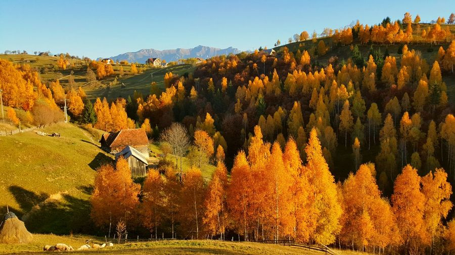 Trees on mountains during autumn