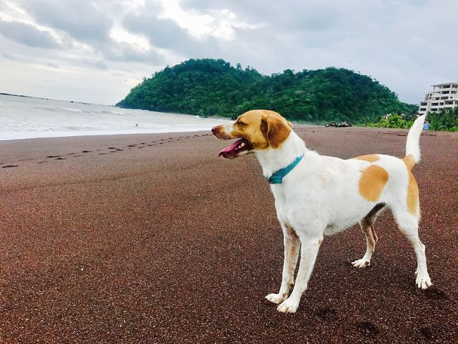 Dog Sky Water Sea Nature Outdoors Beach Beauty In Nature BrunoCarvalhoPhotos Costa Rica Surfinglife Sunset Mybestfriend