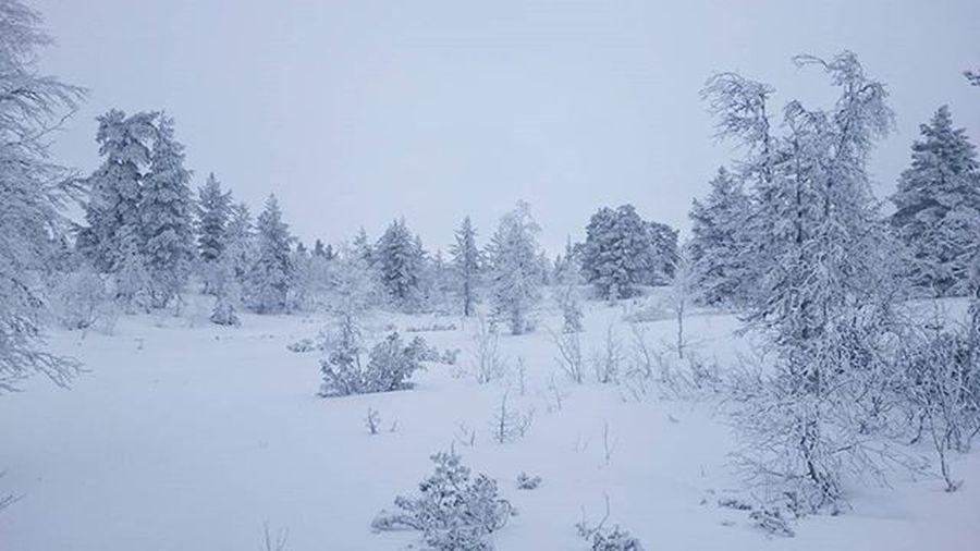 Winterwonderland Hvitt White Norway Norge Rendalen Ilovenorway Visithedmark Visitnorway Mittnorge Vinterstemning Winter Fjellet Idyll Balsamforsjela Envola Nyttår NewYear Grey