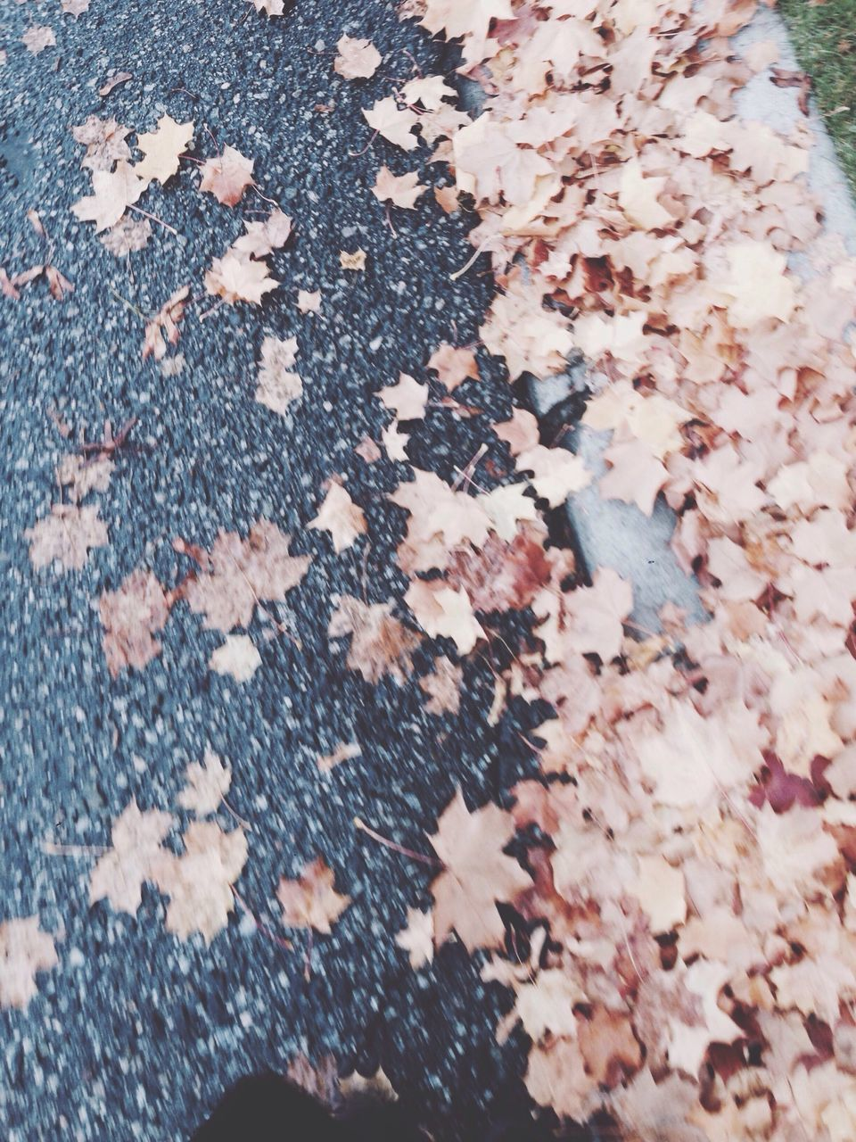 High Angle View Of Maple Leaves On Sidewalk