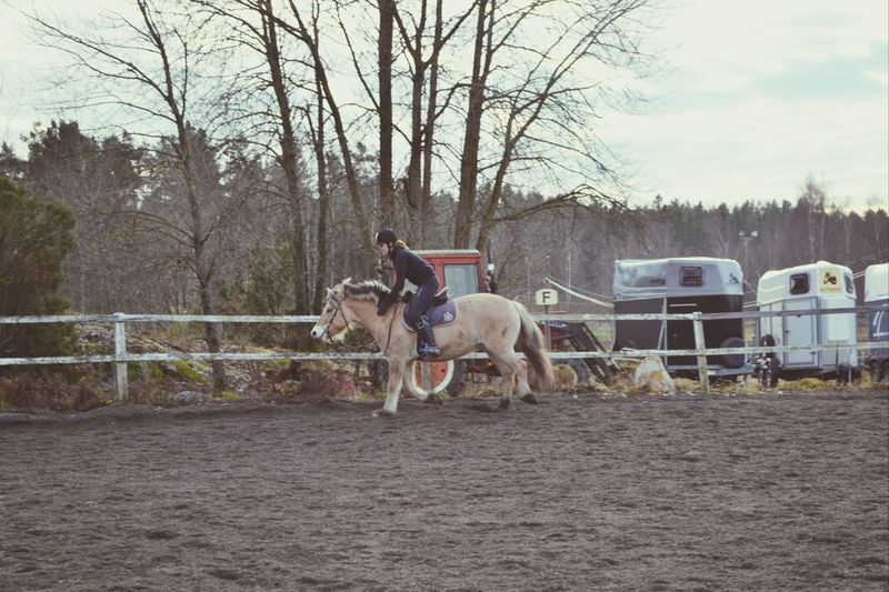 Love this horse!! First Eyeem Photo
