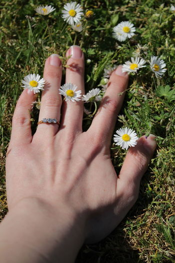 Close-up of hand holding flowering plants in field