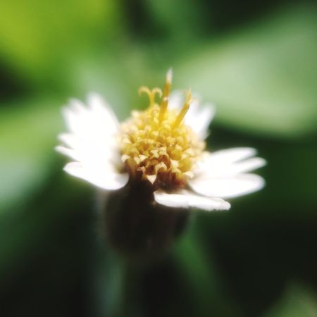 Solitude Close-up Flower Freshness Beauty In Nature Defocused No People Fragility Flower Head Nature Outdoors Day