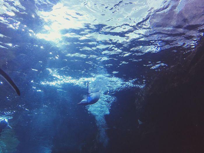 Penguin diving